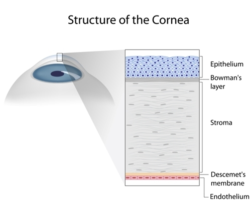 Cornea Disease Lincoln