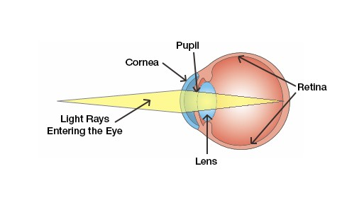 Reading vision correction lincoln vision loss nebraska eye diagram all of this happens continuously and instantly to give us clear vision from near to far distances but our eyes dont always work perfectly ccuart Gallery